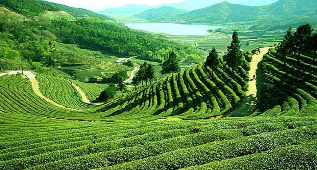 Darjeeling  & Sikkim  tour 10 Day.