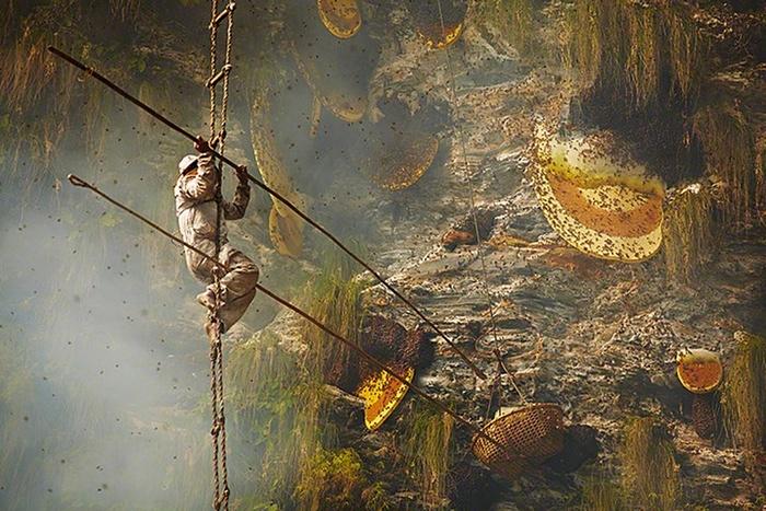 Honey Haunting in Nepal 12 Day.